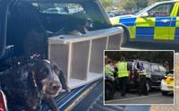 ตำรวจช่วยชีวิต 2 ตูบหลังเจ้าของทิ้งไว้ในรถก่อนเข้าไปเล่นสวนสนุก!