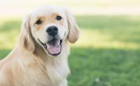 น้ำมันมะพร้าว ช่วยลดอาการคันในน้องหมาได้จริงมั้ยนะ?