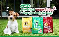 ใหม่! ไอแอมส์ อาหารสุนัขเกรดพรีเมียม พัฒนาสูตรร่วมกับสัตวแพทย์