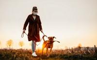 รู้หรือไม่ ... สุนัขเดินทางและขับถ่ายโดยใช้สนามแม่เหล็กโลก ?