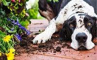 ปรงสาคู พืชมีพิษที่อาจคร่าชีวิตสุนัขได้
