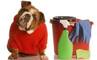 Warning! 6 ผลิตภัณฑ์ทำความสะอาดบ้านที่เป็นพิษต่อสัตว์เลี้ยง