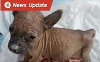 เรื่องราวสุดประทับใจ เมื่อคนใจดีให้ชีวิตใหม่กับลูกหมาขี้เหร่