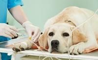 การรักษาแบบมุ่งเป้า (targeted therapy) ทางเลือกใหม่การรักษาสุนัขในปัจจุบัน