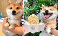 ยิ้มโลกละลาย! เจ้า Uni ชิบะที่มีความสุขทุกครั้งเมื่อเห็นของอร่อย