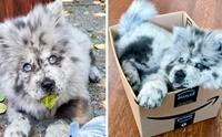 รู้จักเจ้า Chief น้องหมาสีขนแปลกคล้ายขนมยอดฮิต Oreo !