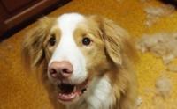 5 สาเหตุขนร่วงของน้องหมาที่พบบ่อย พร้อมวิธีแก้