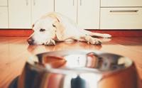 นิสัย(เสีย)ของเจ้าของที่ทำให้น้องหมาเบื่ออาหารตัวเอง!