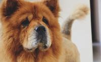จัดอันดับ 5 สายพันธุ์น้องหมาที่รูปร่างหน้าตาคล้าย