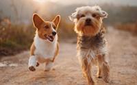 6 สัญญาณเตือนโรคข้ออักเสบในน้องหมา พร้อมวิธีดูแลเบื้องต้น