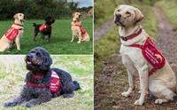 3 ตูบอดีตสุนัขนำทางกับภารกิจใหม่ฝึกดมกลิ่นหาโคโรนาไวรัส
