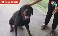 สาววอนสื่อช่วยตามหาบ้านให้น้องหมาร็อตไวเลอร์หลงทาง