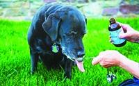 เรื่องน่ารู้ วิตามินดีในสุนัข ตกลงแล้วดีหรือไม่ดี