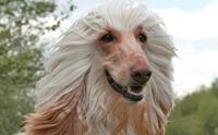 จัดอันดับ 5 สายพันธุ์น้องหมาที่มีจมูกยาวเป็นเอกลัษณ์!