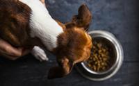 สมัยก่อนคนให้สุนัขกินอะไร ย้อนรอยประวัติศาสตร์ผ่าน 'อาหารสุนัข'