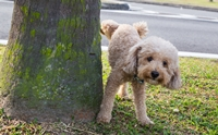 เข้าใจ 5 สัญชาตญาณตามธรรมชาติน้องหมาให้มากขึ้น!