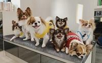 'Little Dog Club' คาเฟ่น้องหมาตัวเล็กแนวมินิมอล !!