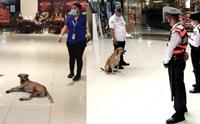 หมาจรแอบเข้าห้างฯในกรุงมะนิลา ก็เลยได้รับตำแหน่งใหม่แบบนี้!