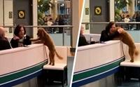 แห่แชร์คลิปน่ารัก! น้องหมาขอให้กอดกลางสนามบินแคนาดา