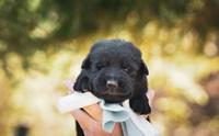 5 ทริคต้องรู้ ดูแลลูกสุนัขแรกเกิดให้เติบโตแข็งแรง!