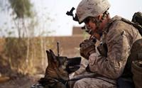 จัดอันดับ 5 สายพันธุ์สุนัขตำรวจ และสุนัขทหารที่ดีที่สุด