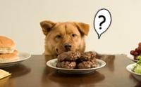 จัดการกับปัญหาน้องหมาหวงอาหาร