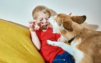 เจาะลึกสาเหตุของการที่เด็กมักถูกสุนัขกัด