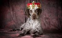 เรื่องเล่าจากอดีต EP3 ... สุนัขราชาที่ถูกกล่าวถึงในประวัติศาสตร์นอร์ดิก
