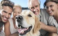 จัดอันดับ 5 สายพันธุ์สุนัขนิยมเลี้ยงประจำปี 2020