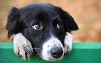 นวัตกรรมคัดกรองมะเร็งในสุนัขแบบใหม่ ง่าย รู้เร็ว ไม่แพง