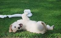ลูกสุนัขวัยน่ารักกำลังซน ต้องดูแลเรื่องอะไรบ้างนะ?