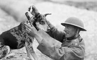 เรื่องเล่าจากอดีต EP4...ประวัติการฝึกสุนัขสมัยสงครามโลก