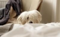น้องหมาปลุกให้พาไปฉี่กลางคืนประจำ พฤติกรรมนี้ผิดปกติไหม?