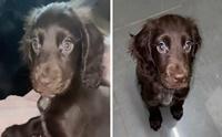 น่ารัก! น้องหมาขนตาสวยเหมือนหลุดมากจากการ์ตูนดิสนีย์
