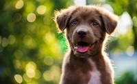 5 เคล็ดลับเลี้ยงน้องลูกหมาตัวใหม่ตามหลักวิทยาศาสตร์