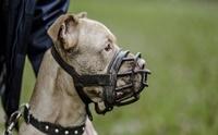 ตะกร้อครอบปากน้องหมา ... มีประโยชน์ หรือ มีโทษ มากกว่ากัน?