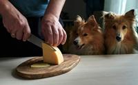 น้องหมากินชีสได้ไหม? ไขข้อสงสัยที่หลายคนอยากรู้