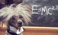 จะรู้ได้อย่างไรว่า สุนัขของเราฉลาดแค่ไหน ?