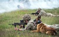 สุนัขทหารเกือบ 1,200 ตัวถูกปลดประจำการตั้งแต่ปี 2002 เนื่องจากเสื่อมสภาพ