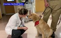ภาพน่ารักเมื่อ จนท.โรงพยาบาลต้อนรับน้องหมาบำบัดกลับมาทำงานอีกครั้ง