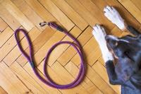 สงสัยไหม ทำไมผู้พิการทางสายตาในไทยไม่ใช้สุนัขนำทาง
