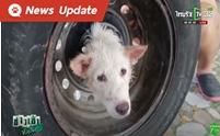 ซนจนเป็นเรื่อง กู้ภัยช่วยลูกสุนัขหัวติดล้อรถยนต์
