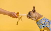 เรื่องกล้วยๆ สำหรับน้องหมาที่คุณควรจะรู้