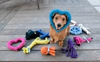 จัดอันดับ 5 ของเล่นที่เหมาะกับน้องหมาตาบอด!