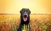 จัดอันดับ 5 สายพันธุ์สุนัขสู้อากาศร้อนได้สบาย