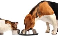 เข้าใจใหม่! เมนูที่คนคิดว่าเป็นอาหารโปรด หมา-แมว แต่จริง ๆ แล้วทำลายสุขภาพ