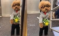 คลิปดังจาก Tiktok เมื่อน้องหมายืนถือดอกไม้รอใครบางคน!