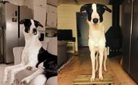 หมาหรือยีราฟ เจ้าแกสบี้ น้องหมาที่มีคอยาวเป็นเอกลัษณ์!