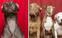 ไวรัลน่ารัก! เมื่อแก๊งน้องหมาถ่ายภาพในโฟโต้บูธ