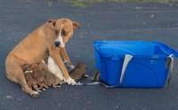 เศร้า! พบแม่สุนัขและลูกเล็ก 9 ตัวถูกทิ้งที่ลานจอดรถโบสถ์